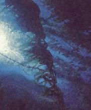 California Kelp Forest